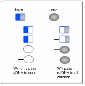 Brother Sister yDNA & mtDNA Passed to Children